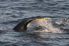 Whale 2015 by Liz Pasteur