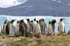 KIngs Penguins by Wiz Pasteur