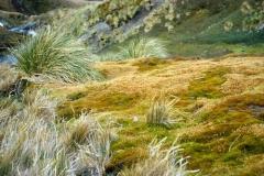 Polytrichum moss bank, near Gull Lake, December 1973 by Terry V Callaghan