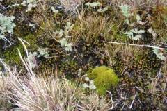 Moss, lichen and grass by Liz Pasteur