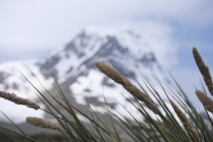 Tussock grass with mountain backdrop by Sam Moore