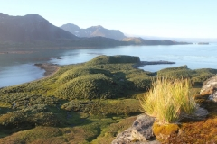 Tussock and bog by Diedre Galbraith